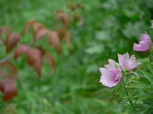 Fleurs d'automne